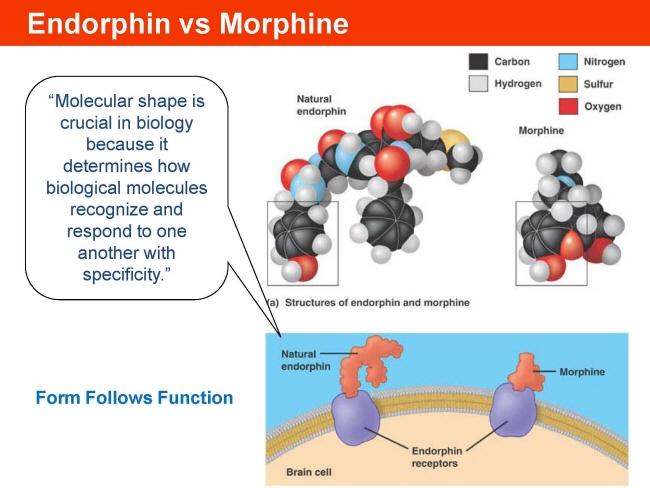 endogenous neuroprotective factors neurosteroids